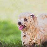 puppy in a field
